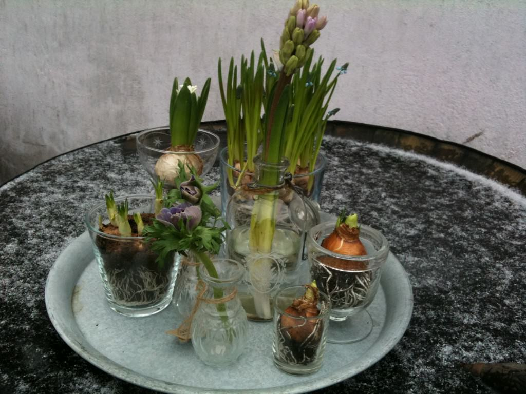 Forår på et fad